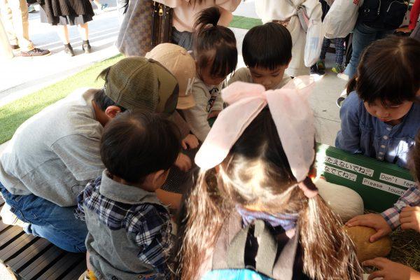 天王寺動物園のテンジクネズミ。子どもたちに大人気すぎる。