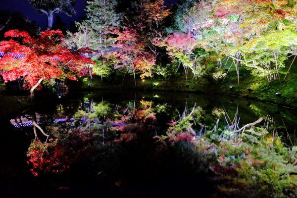 池に映り込む色づいた木々も高台寺の見どころ。