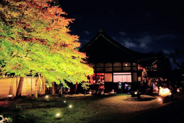 高台寺の紅葉。建物と庭を同時に見られる景色がキレイ。