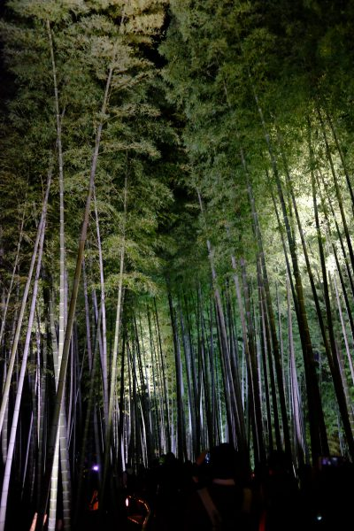 高台寺の竹林。スラッと立ち並ぶ姿に惚れ惚れ。