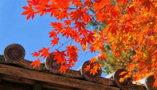 【高台寺の紅葉写真集】京都の紅葉で人気No.1のお寺に行ってきた!