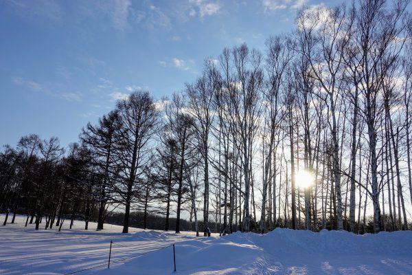 雪国らしい木々が美しい…